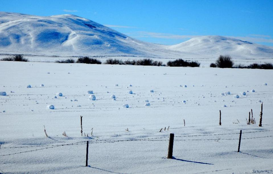This Jan. 30, 2016 photo provided by The Nature Conservancy shows a rare weather event that caused spontaneous snowballs at The Nature Conservancy's Silver Creek Preserve and surrounding fields near the tiny town of Picabo, Idaho. The National Weather Service says snow rollers are caused by an unusual combination of snowfall around a couple inches with the right water density and temperatures near freezing followed by strong winds. (Sunny Healey/The Nature Conservancy via AP)